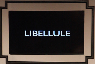 Libellule (prounounced Libby lool) means dragonfly in French.