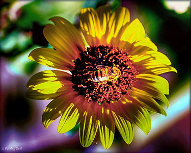 The Social Bumble Bee