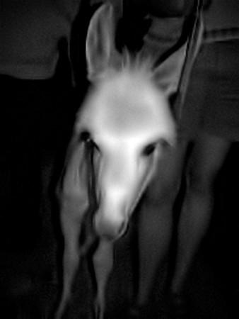 The Pony.