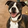 Lassie - 7/20/14 - Meredith Maples