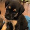 Little Lola - 12/7/18