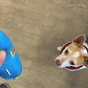Scotty Puppin - 12/7/18