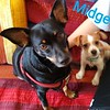 Midge, Muggs, Madelaine - 11/7/18