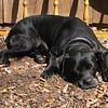 Rosanna sunbathing