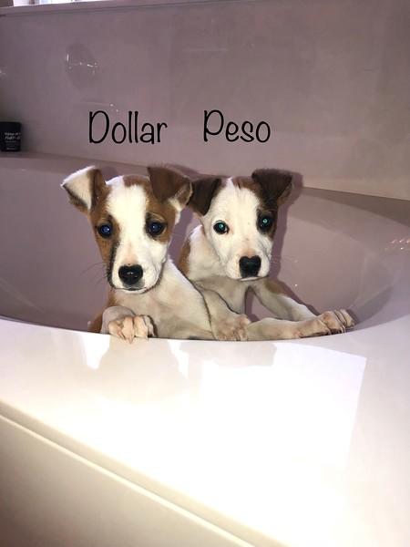 Dollar, Peso