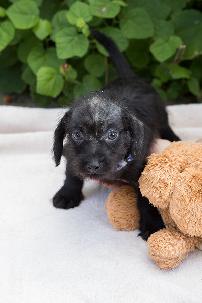 Unknown puppy - 1/4/18 - Carol Swirczek