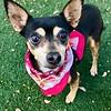 Dixie Ray, Trixie - 2/11/19