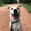 Roger - Trail - 9/28/2017 - Heather Jafar