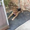 Tanner Dog - 09/25/2017 - Cecilia Eizember