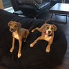 Pawshley and Mary Pitt - 9/29/2017 - Tyler Houston