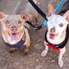 Slider & Marlowe - 5/11/17 - Mike Ryan
