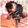 Athena Jamie Rivera 5/18/17