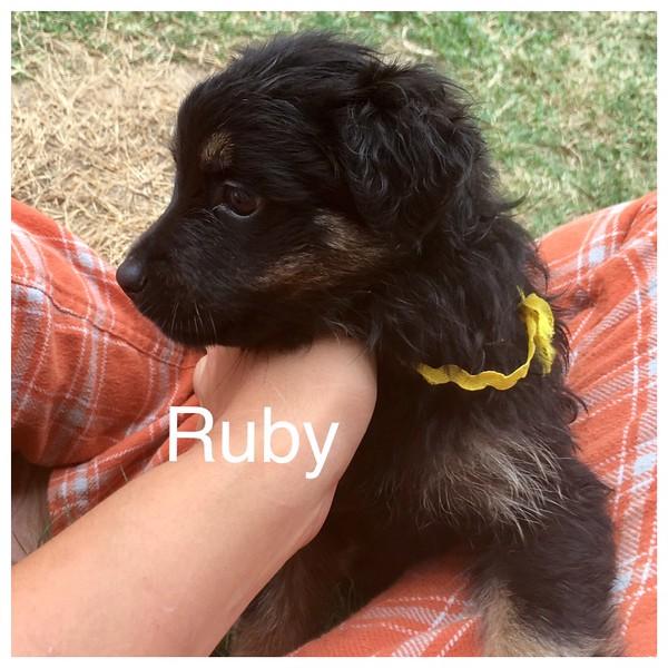 Ruby Jamie Rivera 5/18/17
