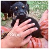 Scout Jamie Rivera 5/18/17