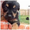 Ava Jamie Rivera 5/18/17