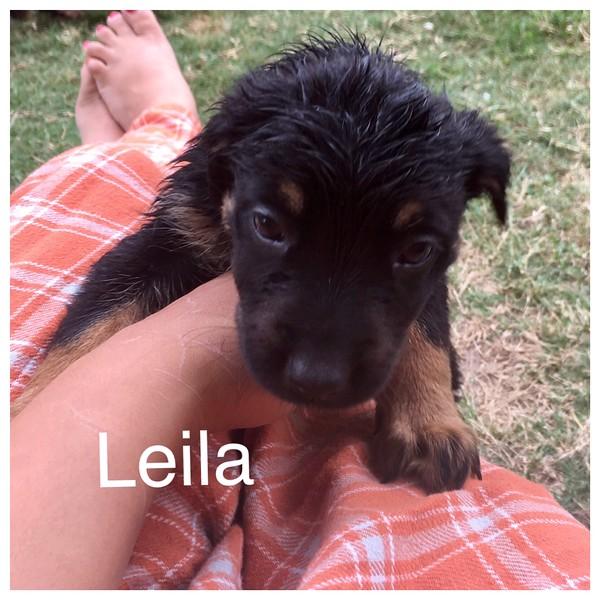 Leila Jamie Rivera 5/18/17