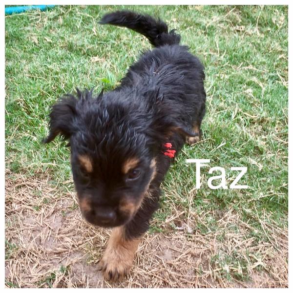Taz Jamie Rivera 5/18/17