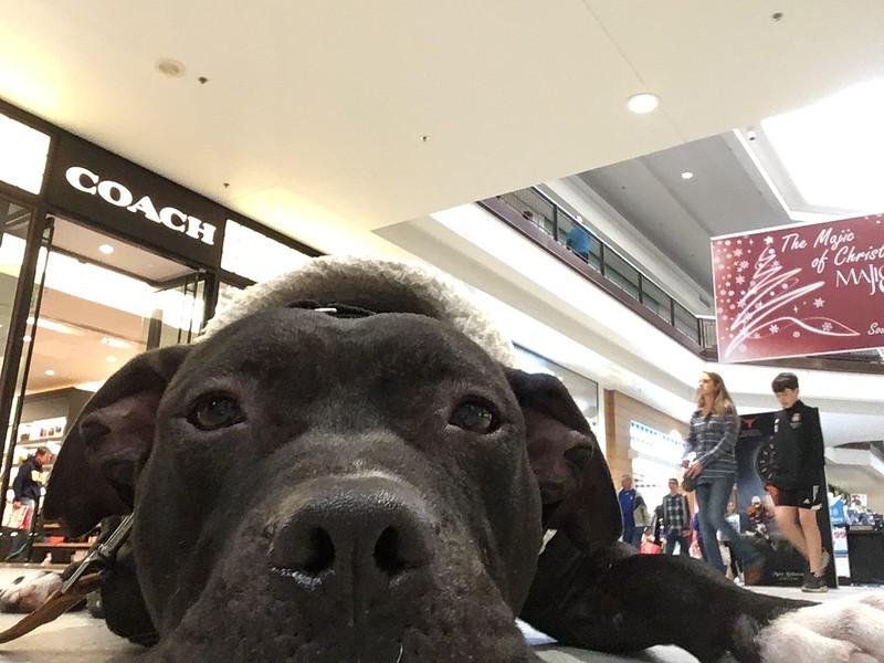 Gage - 12/25/2017 - Jessica Borda