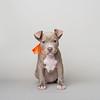 Glitter - 10/18/17 - Betsy Peticolas