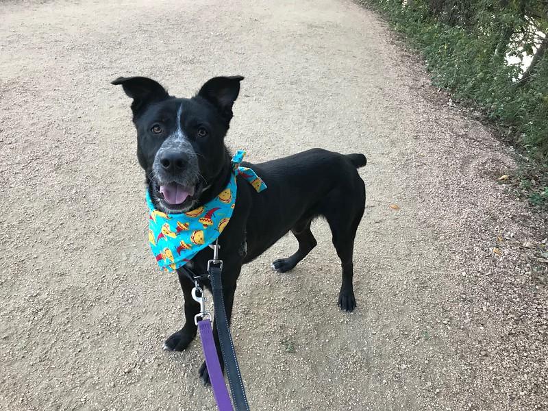 Doug - Trail - 10/27/2017 - Heather Jafar