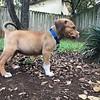 Puppy H - 10/12/2017 - Paige Gummere