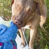 Tanner Dog - 10/17/17 - Mike Ryan