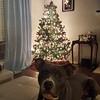 Bowen - Christmas - 12/22/2017 - Kristen Westfall