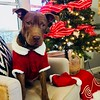 Murray - Christmas - 11/26/2017 - Miria Isbell