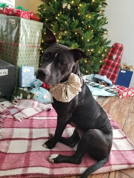 Daisy - 12/27/2017 - sarah hemstreet