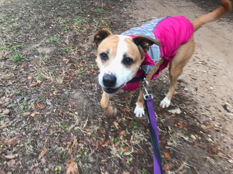 Isabel - Trail - 12/31/2017 - Heather Jafar