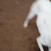 Turnip 3 - 03/27/18 - Karen Hardwick