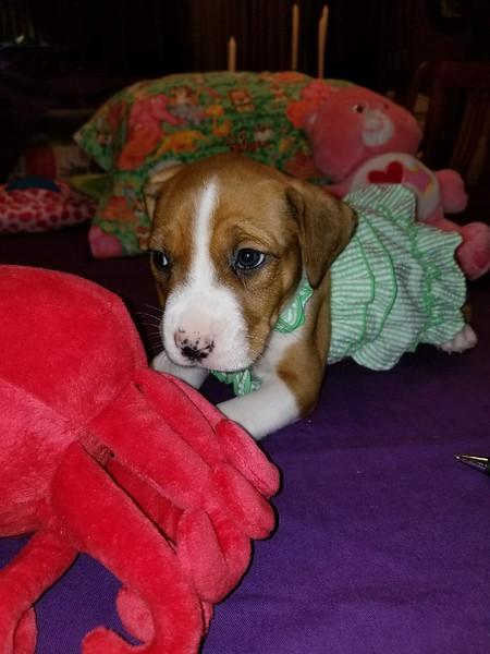 Penelope - 3/24/18 - Polly Rodela