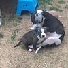 Pepper & Guiness - 3/28/18 - Rachelle Iden