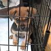 Pee Wee - 03/26/18 - Tracy Schmidt