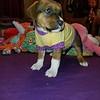 Prince - 3/24/18 - Polly Rodela