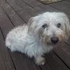 Doggy Parton - 3/29/18