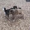 Gwendolyn - 3/14/18 - Tess Freydberg