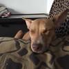 Duke Fuerza - 3/15/18 - Chelsea Keyt