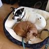 Sophie & Bug - 1/3/18 - Elaine Ward