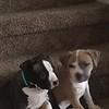 Saddle Sadie & Guiness - 3/28/18 - Rachelle Iden
