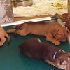 Sea puppies - 06/17/18 - Karen Hardwick