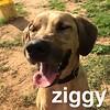 Ziggy - 6/6/18 - Victoria Dawson