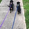 Bonnie & Clyde - 04/11/18 - Maty F