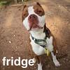 Fridge - 6/6/18 - Victoria Dawson