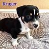 Kruger -  - 5/8/18 - Cara Ward