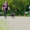 Ellie - Black Dog Special - 6/18/18