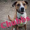 Chubbs - 6/6/18 - Victoria Dawson