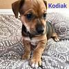 Kodiak - 5/8/18 - Cara Ward