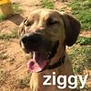 Ziggy - 6/9/18 - Victoria Dawson