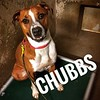 Chubbs - 6/9/18 - Victoria Dawson